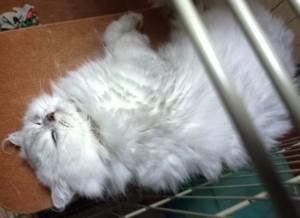 ネコが仰向けに寝るとは思いませんでした。ツンツンしても無視でした(笑)