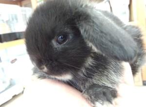 ご家族みんなでウサギ大好きが羨ましいです。