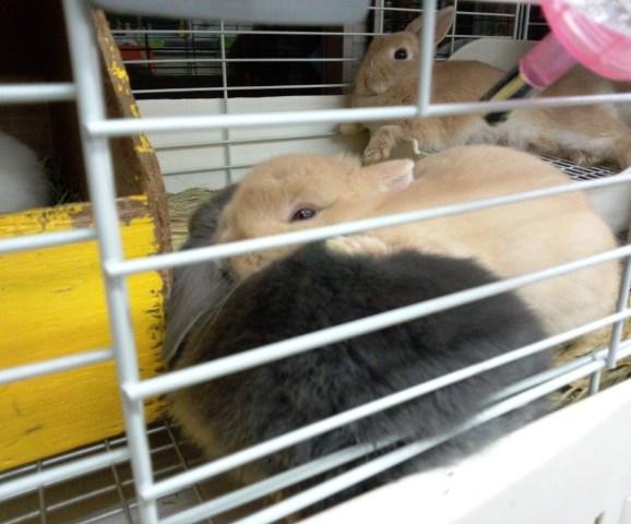 後ろのパリスは育児疲れかな(笑)こっちも眠いって言うの(笑)