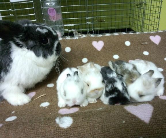 ママのジュリアンの出産は3回目なんですが、5羽・6羽・5羽優秀なんです。