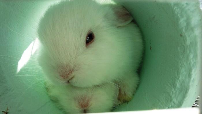 これだからウサギはたまらんです(癒し)