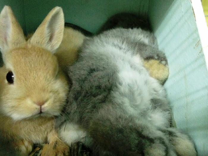 これだからウサギは止めれないんです(癒し)