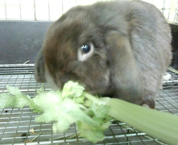 生野菜あげるなセロリが1番!