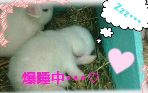 寝る仔は育つ&寝るのが仕事の赤ちゃんです!店主は寝れんです。笑